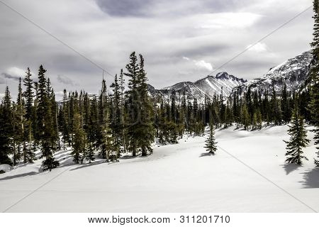 Snow Covered Longs Peak With Pine Trees And Fresh Fallen Snow