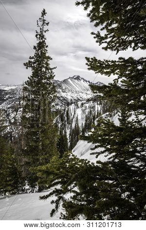The View Of Longs Peak Through The Trees