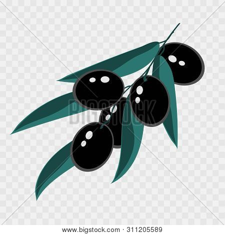 Branch With Black Olives For Decorative Design. Vector Twig