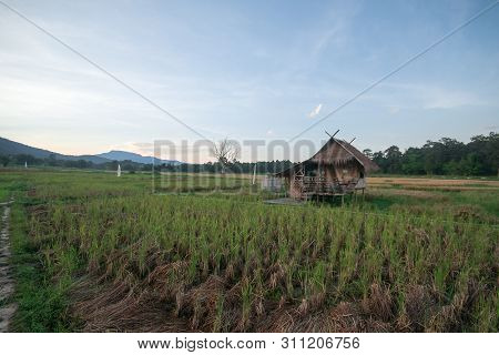Landscape of rice fields in the evening of Thailand