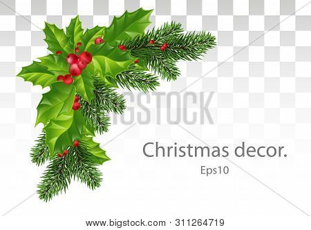 Christmas Decoration Of Holly Leaf Wreath, Red Berries, Christmas Tree Branches, On Transparent Back