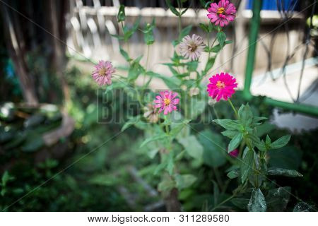 Picture Of The Little Pnk Flowers In The Green Garden At Summer Season