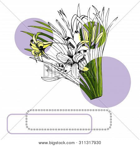 Set With Monochrome And Colored Sketch Of Hemerocallis Flowers Bouquets, Circles And Frames. Hand Dr