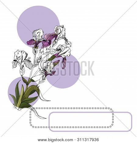 Set Of  Bouquet Of Iris Flowers, Lilac Circles And Frames. Hand Drawn Ink And Colored Sketch. Collec