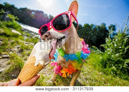 Dog  Summer Vacation   Licking Ice Cream
