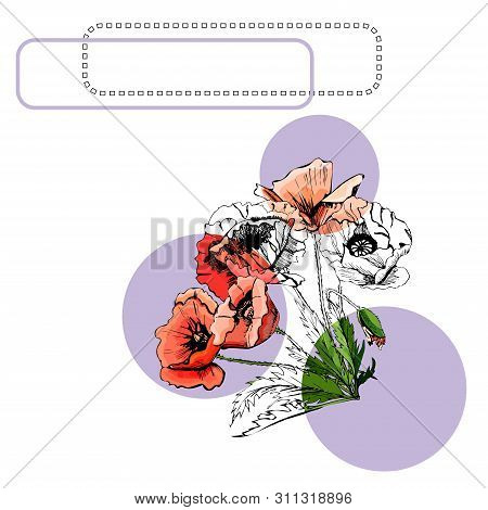 Collection With Color And Monochrome Bouquets Of Poppy Flowers With Leaves, Circles And Frames. Hand