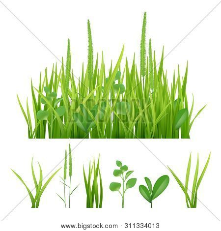 Green Grass. Fresh Garden Elements Nature Vector Pictures Of Herbs And Leaves. Fresh Growth Grass, G