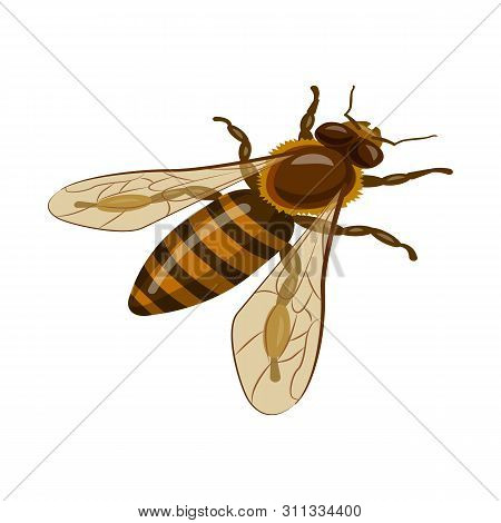 Isolated Object Of Bumblebee And Wild Icon. Set Of Bumblebee And Biology Stock Symbol For Web.