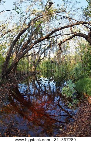 Small Pond Near The Trailhead Of The Coastal Prairie Trail In Everglades National Park, Florida.