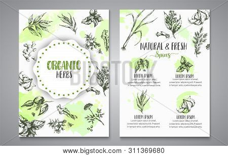 Herbs And Spices Posters. Herb, Plant, Spice Hand Drawn Banners, Menu Elements. Organic Garden Herbs