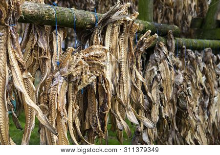 The Picture Shows A Wooden Stand Where You Can See Dried Fish