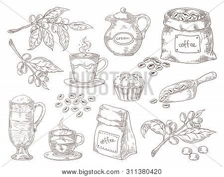Hand Drawn Coffee Beans. Vintage Sketch Of Coffee Leaves Branch Roasted Beans And Bag. Vector Isolat