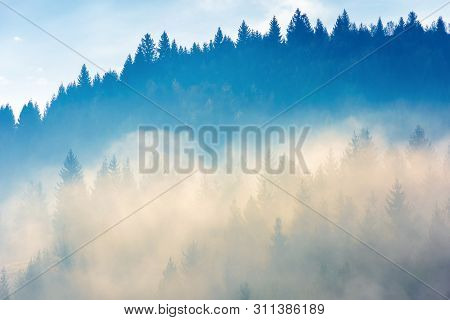 Coniferous Trees In The Fog On The Hill. Amazing Nature Phenomenon In The Chilly Morning. Awesome Au