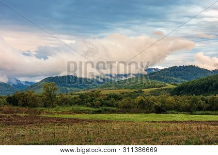 Rural Field In The Mountains At Sunrise. Trees On The Edge Of A Meadow. Overcast Weather With Intere