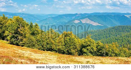 Carpathian Countryside In Early Autumn. Beech Forest On The Edge Of A Hill. Ridges Rolling In To The