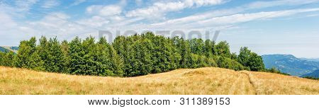 Carpathian Countryside In Late Summer. Beech Forest On The Edge Of A Hill. Blue Sky With Beautiful C