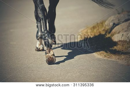 Feet Running Sports Horse. The Back Leg Of A Shod Horse. Hooves Of A Horse With Horseshoes.