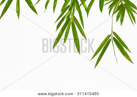 Growing Leaf Bamboo Frame Nature On White Isolated Texture Background(clipping Path). Green Energy A