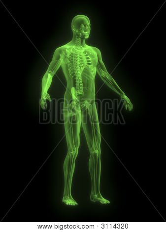 X-Ray Of Man Green Front