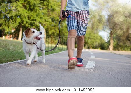 Dog Ang Little Child Walking At The Park Sunset. Friendship And Obedience Concept.