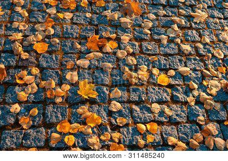 Autumn background. Fallen orange autumn leaves on the textured stone pavement, autumn sunny view. Autumn leaves background, golden autumn leaves on the textured pavement