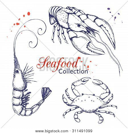 Seafood Collection. Hand Drawn Engraved Seafood Element In Vintage Style With Ink Splatter Isolated