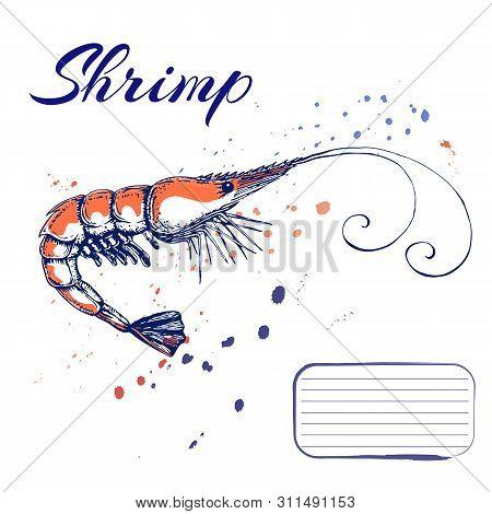 Ink Hand Drawn Shrimp Or Prawn Concept For Decoration Or Design. Ink Spattered Shrimp Illustration.