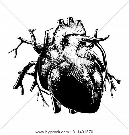 Vector Engraved Style Illustration For Posters, Decoration And Print. Hand Drawn Sketch Of Anatomica