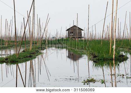 Bamboo Hut On Taunggyi Floating Vegetable Gardens Of Inle Lake, Myanmar