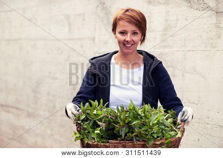 Gardening fresh herbs in summer  woman with wooden basket full of fresh herbs ment peppermint tea