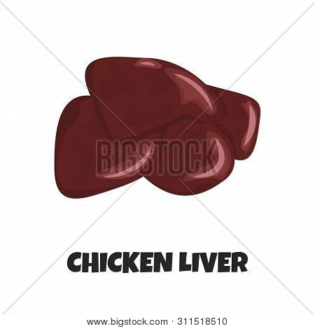 Vector Realistic Illustration Of Raw Chicken Liver. Concept Design Of Internal Organ Of Poultry. Unc