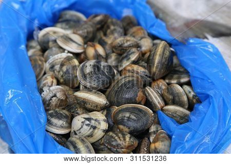 Shells Of Different Colors For Sale In The Market