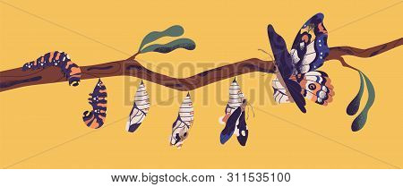 Butterfly Development Stages - Caterpillar Larva, Pupa, Imago. Life Cycle, Metamorphosis Or Transfor