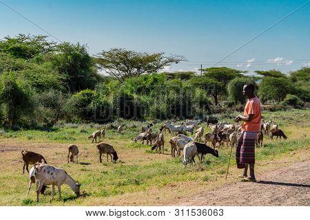Kenya.2019 Year. Janvier 2.masai Shepherdess With Goats Near Water Hole In Samburu