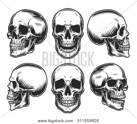 Human Skulls Collection In Different Positions In Vintage Monochrome Style Isolated Vector Illustrat