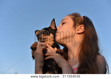 Chihuahua Dog Small Breed Dogs. Dog Is A Friend Of Man. Beautiful Young Caucasian Girl Holding With