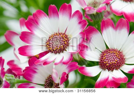 Beautiful Pink Flowers And Green Grass