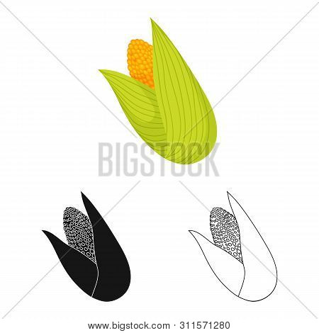 Isolated Object Of Cob And Corn Symbol. Collection Of Cob And Sweetcorn Stock Symbol For Web.