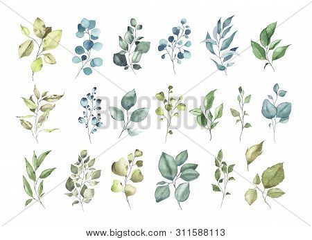 Collection Of Watercolor Tropical Greenery Floral Leaf Plant Forest Herbs Leaves Spring Flora Isolat