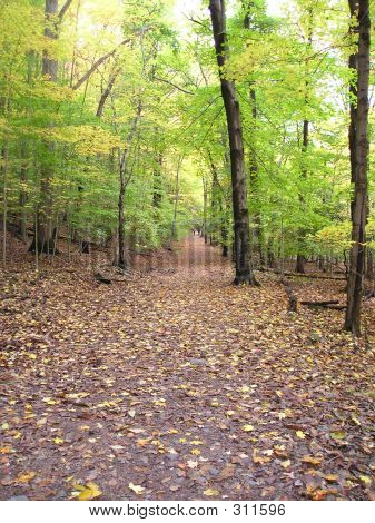 Beginning Of The Fall Path