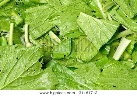 Chinese Cabbage Washing For Food Preparation