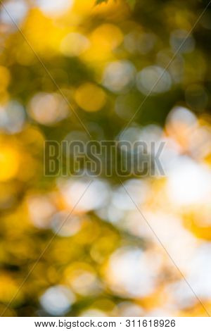 autumn bokeh background and sunlight