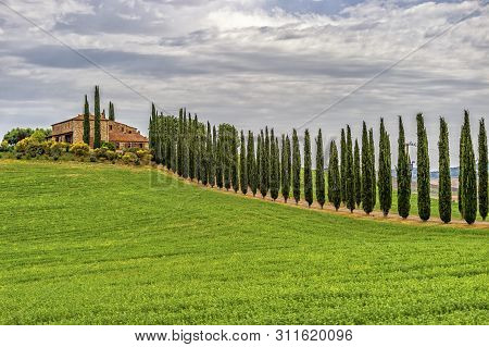 The Circle of Cypress tree in Torrenieri, Montalcino, Province of Siena, Toscana,Italy poster