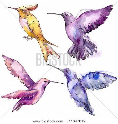 Sky Bird Colibri In A Wildlife Isolated. Watercolor Background Set. Isolated Hummingbird Illustratio