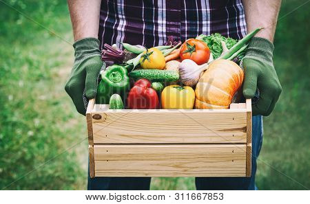Farmer Holds In His Hands A Wooden Box With A Vegetables Produce On The Green Background. Fresh And