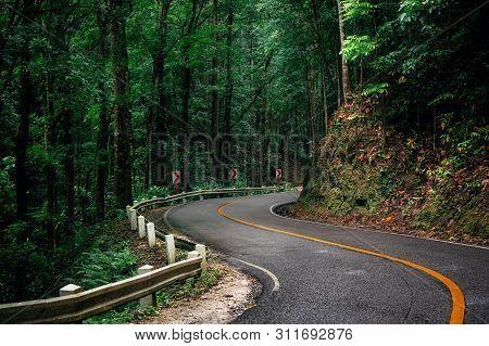 Winding Road Through Green Bilar Man-made Forest, Bohol, Philippines