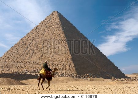 Bedouin On Camel Near Of Great Egypt Pyramid
