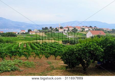 A View Of A Sprawling Wine Vineyard Growing The Local Grk Grapes With The Small Town Of Lumbarda In