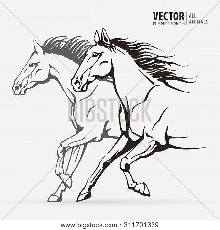 Beautiful Arabian Horses. Silhouettes Of A Running Horses. Galloping Animal. Sport. Vector Illustrat