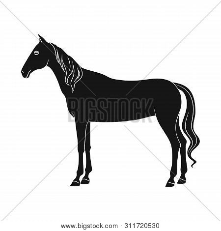 Vector Design Of Steed And White Sign. Set Of Steed And Hoofed Stock Symbol For Web.